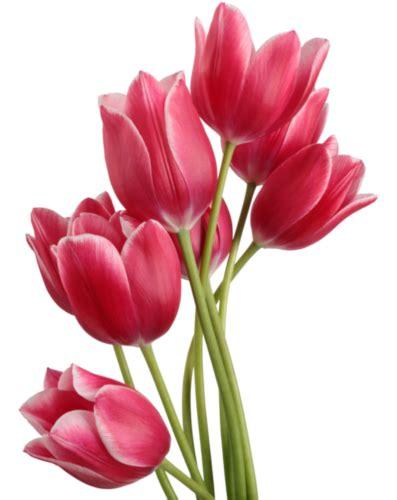 Bunga Poppy Mix Colour malaysia johor bahru florist xinflorist