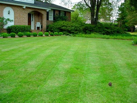 winter lawn care 7 easy winter lawn care tips for raleigh nc homeowners