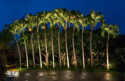 Palm Tree Landscape Lighting Maui Led Landscape Lighting Palm Tree Outdoor Lights