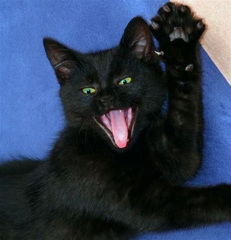 imagenes en negro de gatos el gato negro ese gran incomprendido blog mascotea