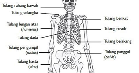 Fungsi Propolis Bagi Tubuh Manusia Adalah 1 Sebagai Suplementasi K fungsi rangka manusia belajar ipa