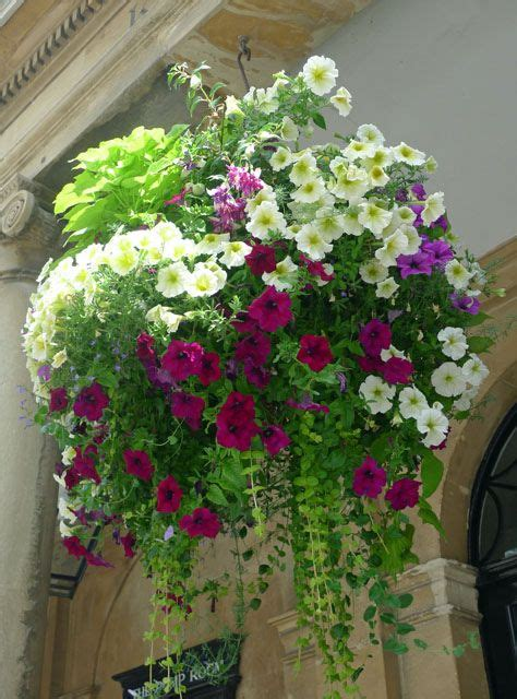 Flowers For Hanging Planters by Best 25 Hanging Flower Baskets Ideas On Decorative Hanging Baskets Hanging Baskets