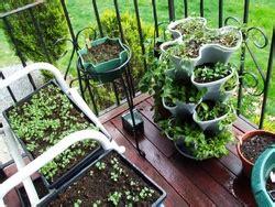 lada coltivazione come piantare frutta e verdura in balcone coltivare orto