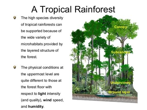 Dominant Plants In Tropical Rainforest - 11 ecology