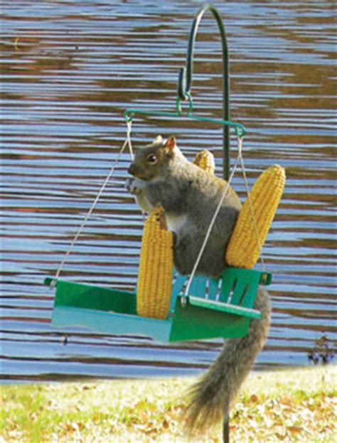 squirrel swing duncraft com squirrel porch swing