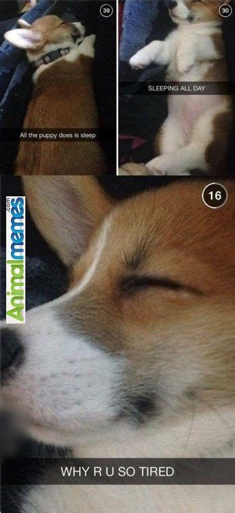puppy sleeps all day 956 best images about memes on plays aliens and best hug