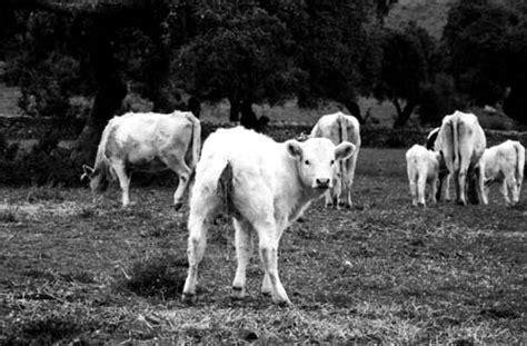 imagenes en blanco de animales fotos de animales en color y blanco y negro tradicional