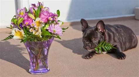 flowers poisonous to dogs top 10 poisons that you may not about