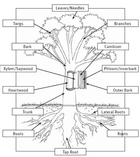 labeled tree diagram plant food diagram plant free engine image for user