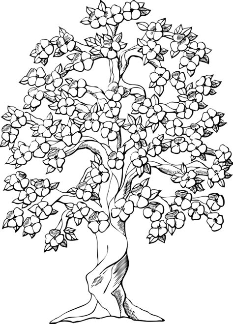 trees more coloring book books tree coloring pages 3 coloring pages to print