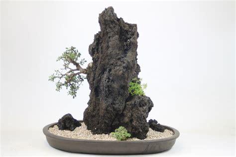 bonsai tree rock planting workshops