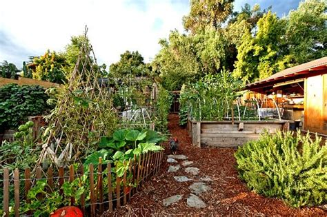 organic vegetable gardens organic vegetable garden hooked on houses