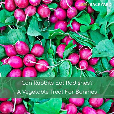 vegetables bunnies can eat can rabbits eat radishes a vegetable treat for bunnies