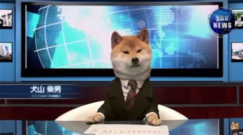 puppy news the news is actually watchable with a news anchor
