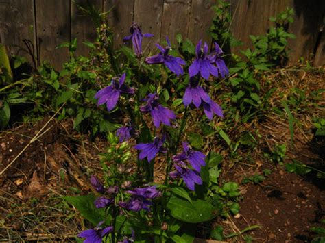 Today S Flowers Identify Sketching Out Purple Garden Flowers Identification