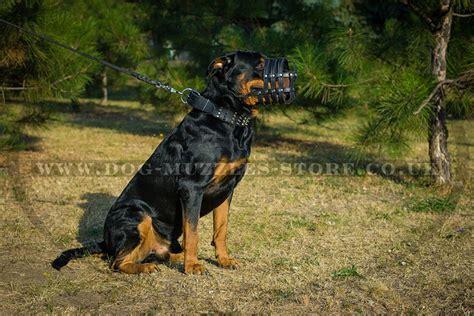 buy rottweiler puppies uk leather muzzle uk rottweiler muzzles for large breeds