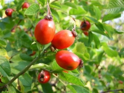 Obat Asam Lambung China obat asam lambung tinggi terbaik 100 herbal terbukti