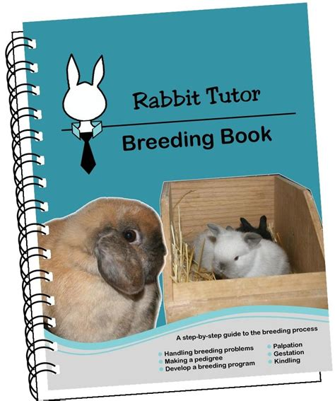 rabbit books bunny rabbit books rabbit book bunny book rabbit