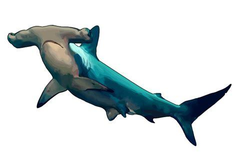 banco de imagenes en png gratis archivo tiburon martillo png canariwiki