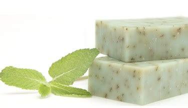 Sabun Temulawak Cair sabun herbal cara membuat harga dan khasiat sabun herbal