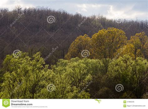 different color trees different shades of colors in the trees stock photo