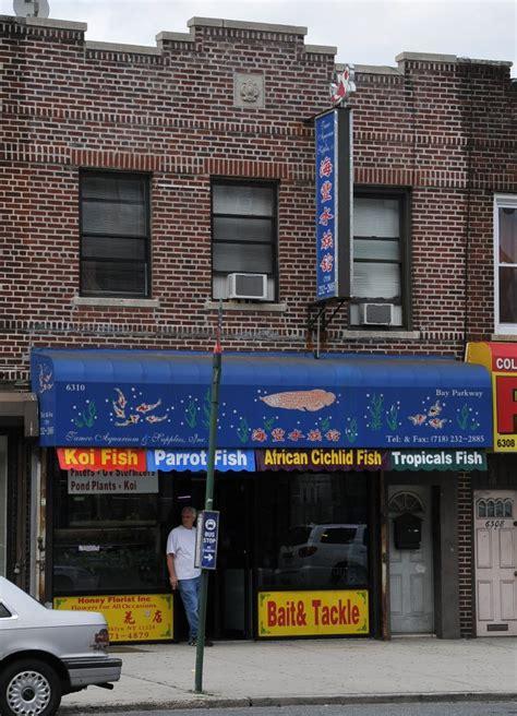 aquarium store in brooklyn to world class aquarium