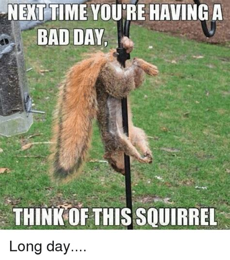 Long Day Memes - next time you re having a bad day think of this squirrel long day bad meme on sizzle