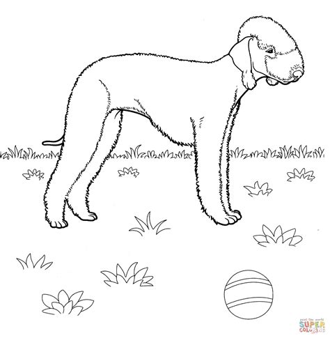 Jack Russell Terrier Coloring Pages Coloring Pages Terrier Coloring Pages