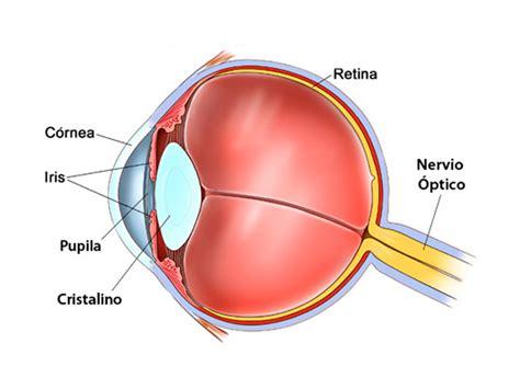 imagenes de los ojos y sus partes partes del ojo instituto de la visi 243 n