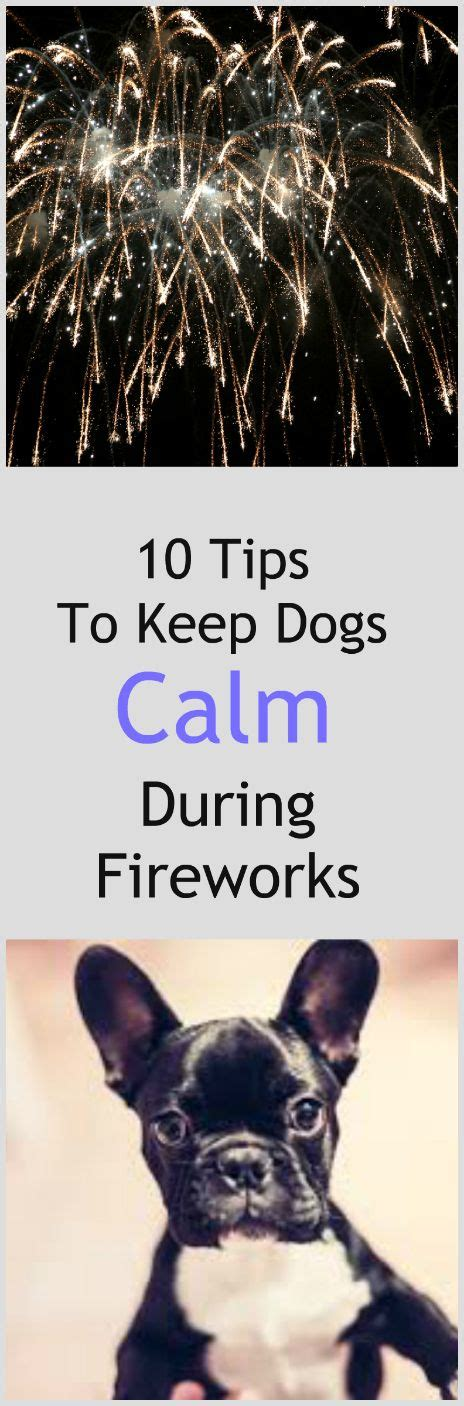 how to calm dogs during fireworks 17 best images about 4th of july on