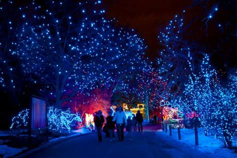 zoo lights denver co 12 best light displays in colorado 2016