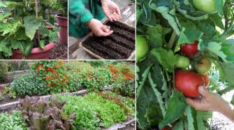 growing a vegetable garden epicurious epicurious