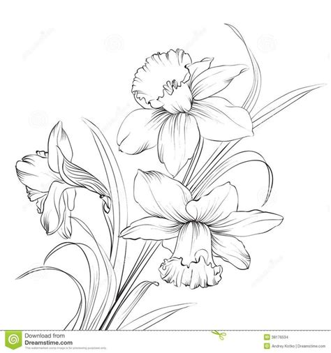 narcissus tattoo designs best 25 narcissus ideas on december