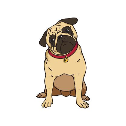 pug clip pugs clip vector images illustrations istock