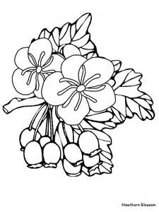 coloring pages of australian flowers free australia flowers coloring pages