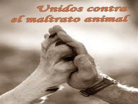 no maltrato animal maltrato animal el maltrato animal