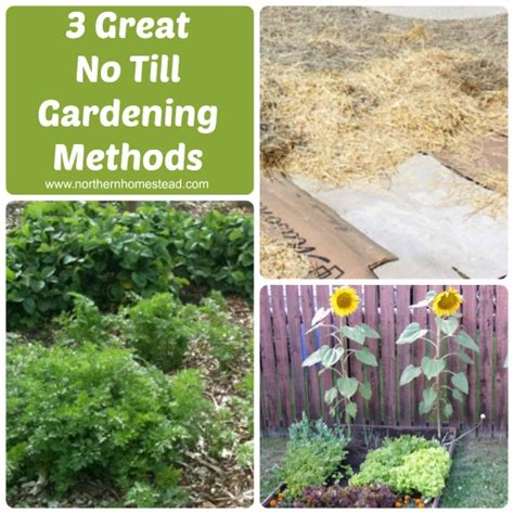 Back To Gardening by Hometalk Compare Back To Garden Lasagna Garden