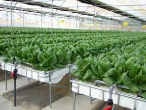 Indoor Vegetable Garden Lighting - smart farming technologies cc smart farming technologies cc