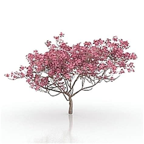cherry blossom tree 3d model free 3d model tree category gardening