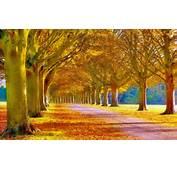 HD Kalite Sonbahar Resimleri Herbst Fotos Nature Autumn Gelbe