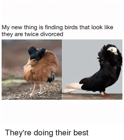 Find Similar Looking My New Thing Is Finding Birds That Look Like They Are Divorced They Re Doing