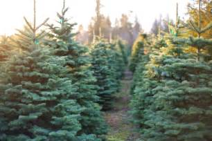list christmas tree farms in west michigan woodtv com