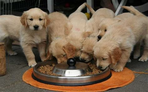 dogs giving birth giving birth best pet home remedies