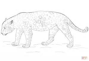 What Color Are Jaguars Jaguar Coloring Page Free Printable Coloring Pages