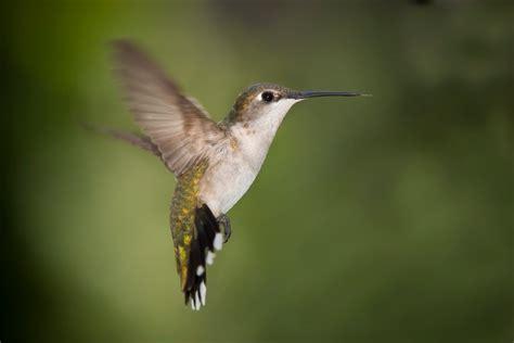 animals zoo park hummingbird kingfisher birds pictures