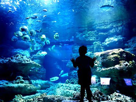 aquarium le plongez sous le trocad 233 ro dans l aquarium de vol 714