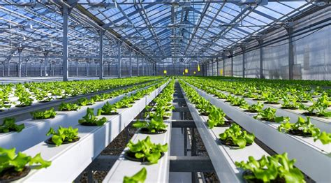 hydroponic farming business plan sample ogscapital