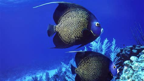 animals fishes underwater ocean sea life swim float