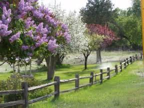 flowering trees crestone eagle