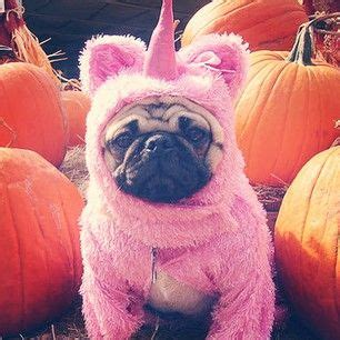 pug unicorn costume 51 pugs who just want to be